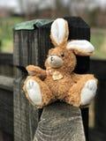 在木头的一只兔子 免版税库存照片
