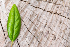 在木头的一片绿色叶子 免版税库存照片