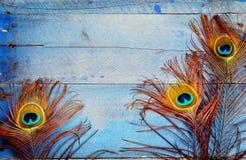 在木头的三根孔雀羽毛 库存照片