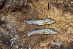 在木头的两条小干鱼 免版税库存图片
