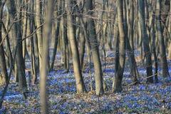 在木头的会开蓝色钟形花的草 库存图片