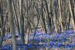 在木头的会开蓝色钟形花的草 免版税库存图片