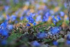在木头的会开蓝色钟形花的草 免版税图库摄影