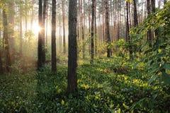 在木头的光芒 库存图片