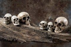 在木头的六块头骨 免版税库存图片