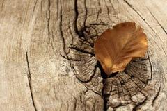 在木头的叶子 免版税库存照片