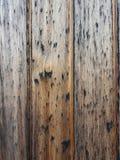 在木头的墙壁 免版税库存图片