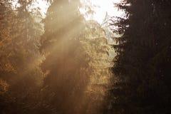 在木头的太阳上升 免版税库存照片