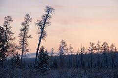 在木头的日落在树之间 免版税库存图片