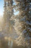 在木头的日落在树之间 库存图片