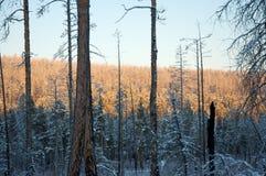 在木头的日落在树之间 库存照片