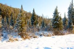 在木头的日落在树之间 免版税图库摄影