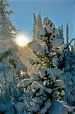 在木头的日落在树之间 免版税库存照片