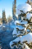 在木头的日落在树之间 图库摄影