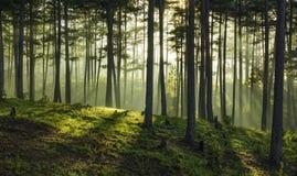在木头的早晨 库存照片