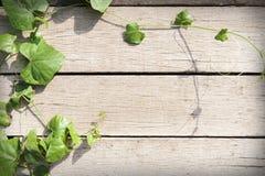 在木头的春天叶子 免版税库存照片