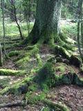 在木头的树 免版税库存图片