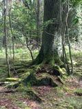 在木头的树 库存照片