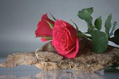 在木头的桃红色玫瑰 免版税图库摄影