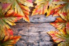 在木头的槭树叶子 免版税库存图片