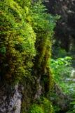 在木头的灌木 免版税库存照片