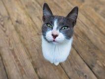 在木头的灰色猫 库存图片