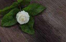 在木头的热带茉莉花花 茉莉花花和叶子在增殖比 免版税图库摄影