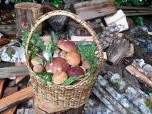 在木柴的牛肝菌蕈类篮子 免版税库存照片