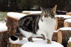 在木头的猫 免版税库存照片