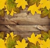 在木头的秋叶 库存图片