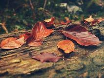 在木头的秋叶 库存照片