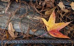 在木头的秋天叶子 免版税图库摄影