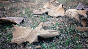 在木头的秋天叶子 库存图片