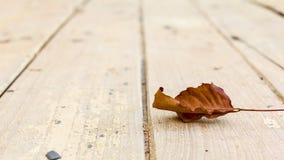在木头的秋天叶子 库存照片