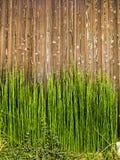 在木头的竹射击 免版税库存图片