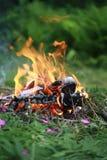 在木头的篝火与蕨 图库摄影