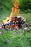 在木头的篝火与蕨 免版税图库摄影