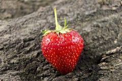 在木头的红色草莓果子 库存图片