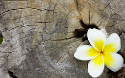 在木头的花背景的 库存图片