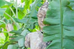 在木头的菩萨雕象 免版税图库摄影