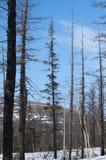 在木头的蓝天 库存图片