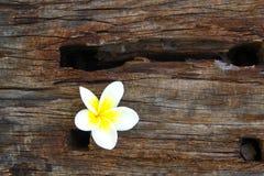 在木头的赤素馨花花 库存图片