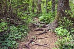 在木头的路 库存图片