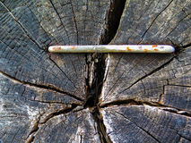 在木头的钳位 库存图片