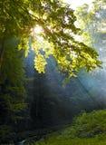 在木头的阳光 库存图片