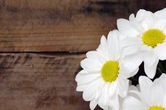 在木头的雏菊花 库存图片