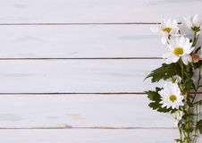 在木头的雏菊 免版税库存照片