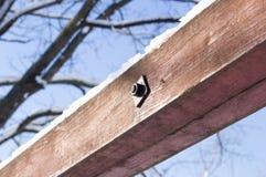 在木头的雪 免版税库存照片