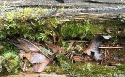 在木头的青苔 库存照片