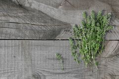 在木头的麝香草 免版税库存图片